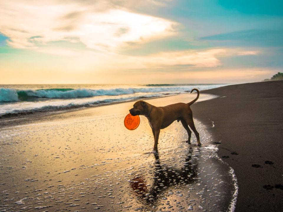 ferie med hund